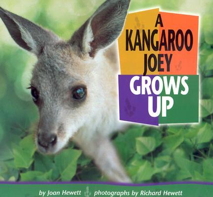 A Kangaroo Joey Grows Up By Hewett, Joan/ Hewett, Richard (PHT)/ Hewett, Richard (ILT)